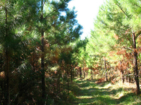 Hoolie Bacon Trail 111