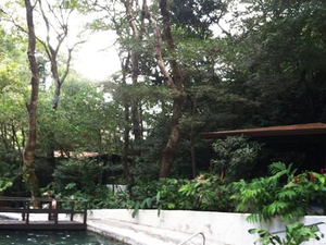 Buena Vista Rainforest Combo Tour Photos