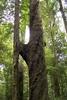 H Tree Track
