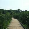 Huntley Meadows Park