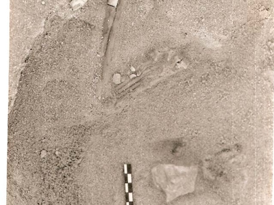 Fossil Jackal Arm In-situ At The Hoedjispunt