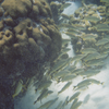 Many Species Of Fish Shelter