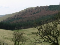 Housedon Hill