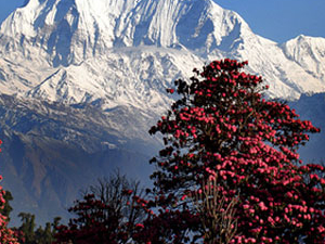 Poon Hill Trek Photos