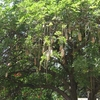 Interesting - Tree Alongside Commercial Street - Bangalore
