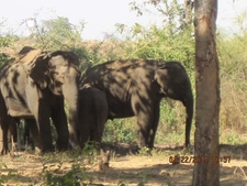 Couple Of Elephants At Tadoba