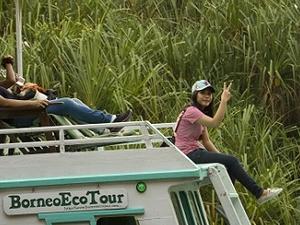 Orangutan Tour Deluxe BorneoEcoTour Photos