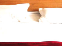 Hotel Neha Palace