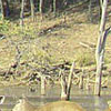 Jamwa Ramgarh Wildlife - Rajasthan