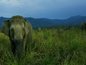 Corbett Wildlife Safari Photos