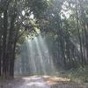 Dense Forest At Corbett