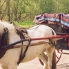 Jaunting Cars In Killarney National Park