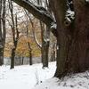 Jefferson Park Trees In Snow