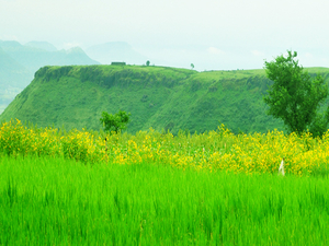Valley of Flowers at Kaas Plateau - 20th & 21st September Photos