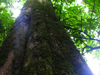 Kakamega Forest National Reserve
