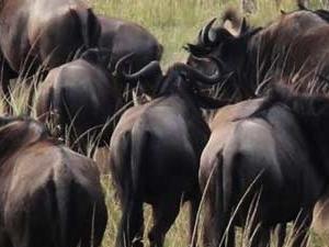Kenya Horizon Safari