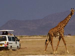 Great Kenya Safari Photos