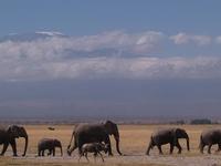 14 Days - Best of Kenya Safari