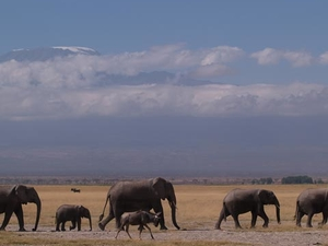 14 Days - Best of Kenya Safari