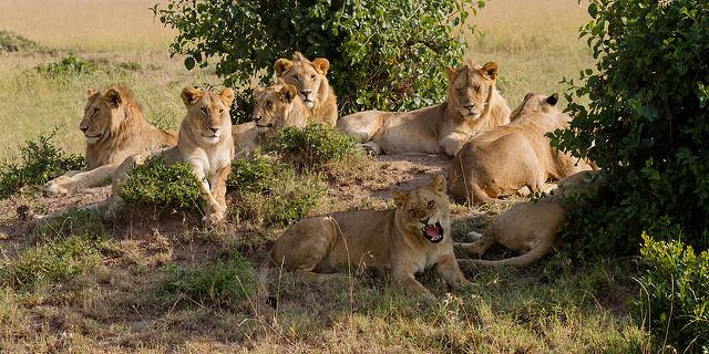Senior Citizen Kenya Safari Photos