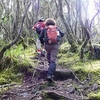 Kilimanjaro Umbwe Route