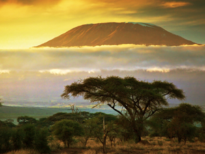 Kilimanjaro's Marangu Route 7 Days Photos