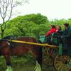 Tourists Near Ross Castle