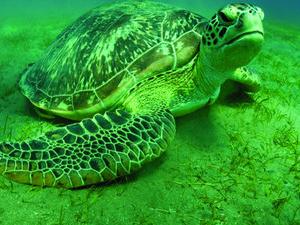 Kiunga Marine National Reserve
