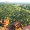 Kununurra From Lookout