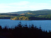 Kielder Forest