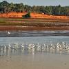 The Thrissur Kole Wetlands