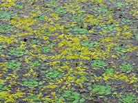 Upo wetland