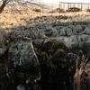 Kromdraai Fossil Site