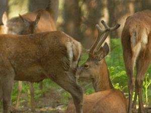 Lacuniacha Wildlife Park