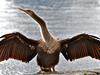 Lake Eola Birdlife
