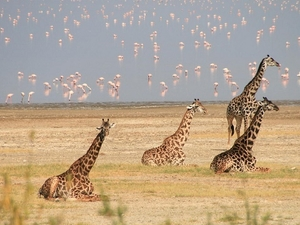 3 Days Safaris Lake Manyara, Ngorongoro & Tarangire