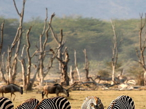 Camping Safaris in the Manyara/Ngorongoro/Serengeti/Tarangire Photos