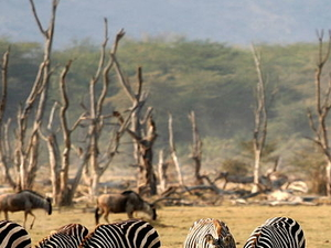 Day Excursions. Lake Manyara National Park Photos