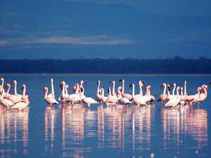 Best of Kenya Safari Photos
