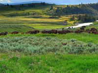 Lamar Valley Trail
