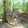 La Milpa Site - Orange Walk District - Belize