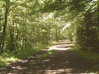 Larkin State Park Trail