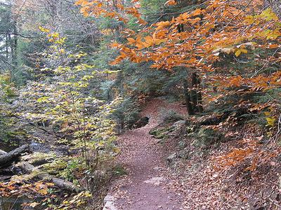 Leaf Rapids
