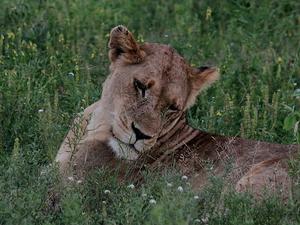 6 Days: Cape To Kruger Tour Photos