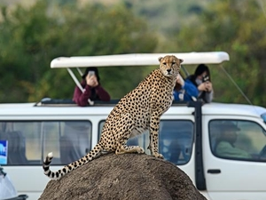 Super Saver Masai Mara Luxury Safari Photos