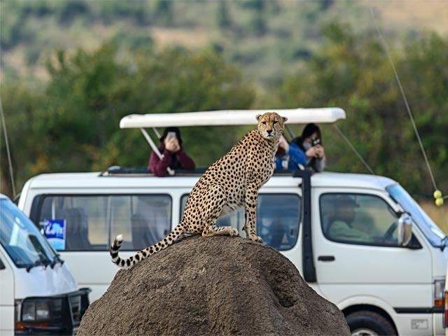 Super Saver Masai Mara Luxury Safari Photos