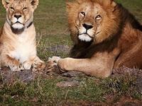 Arusha, Ngorongoro and Manyara 4 Days Packages