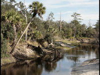 Little Econlockhatchee River