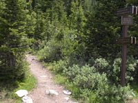 Little Golden Forest Trail