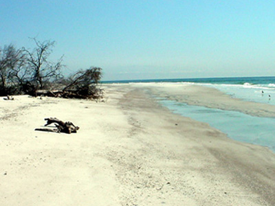 Little Talbot Island State Park
